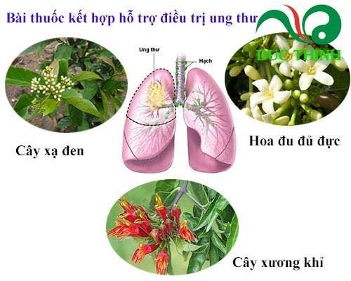 bài thuốc chữa ung thư từ cây xương khỉ
