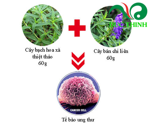 bạch hoa xà thiệt thảo bán chi liên