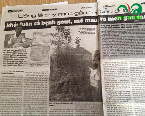 Bài báo nói về công dụng chữa bệnh của cây mật gấu
