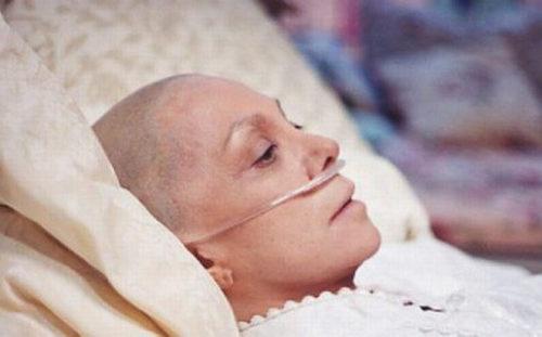 cây xương khỉ hỗ trợ điều trị ung thư