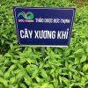 Cây xương khỉ tại thảo dược Đức Thịnh được trồng chuẩn VietGap