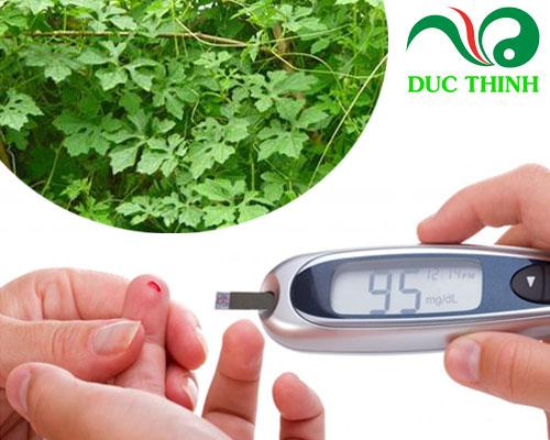 Dây khổ qua rừng trị bệnh tiểu đường