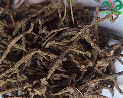 Rễ cây nở ngày đất hỗ trợ điều trị bệnh gout
