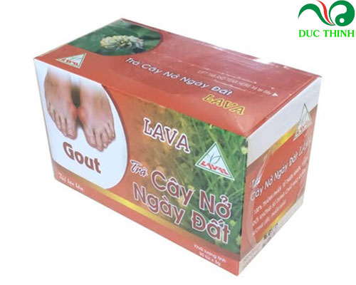 Trà nở ngày đất trị bệnh gout